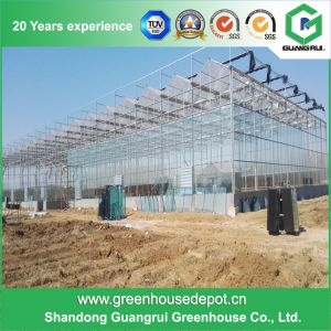 Agriculture Tunnel Vegetables PE Polytunnel Greenhouse for Sale pictures & photos
