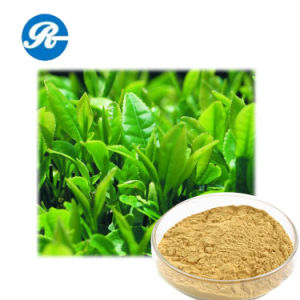 Natural Plant Extract Tea Polyphenol pictures & photos