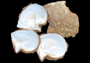 White Mother of Pearl Shell Raw Material for Decoration pictures & photos