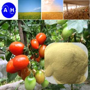 Amino Acid 70% Amino Acid Powder 12-0-0 Liquid Foliar Fertilizer pictures & photos