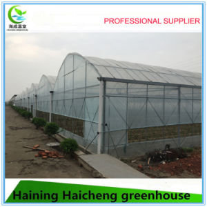 Large Space Film Multi Span Green House for Fruit pictures & photos