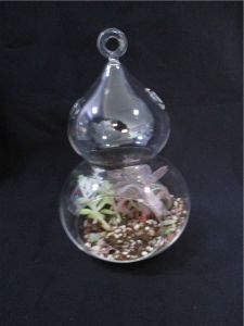 Glass Vases for Decoration