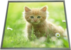 19 Inch Ultra-Thin Advertisement LCD Display