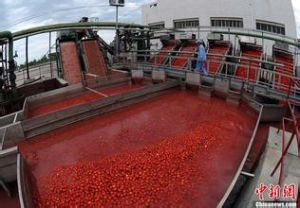 Xinjiang Aseptic Tomato Paste in Big Drums