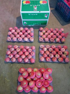 New Crop Qinguan Apple Is Coming pictures & photos