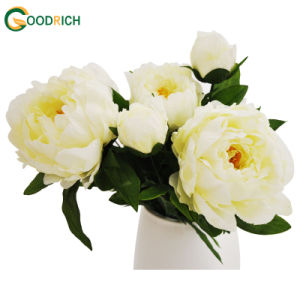 Peony Bush Flower for Decoration pictures & photos