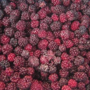 IQF Freezing Organic Blackberry Zl-016