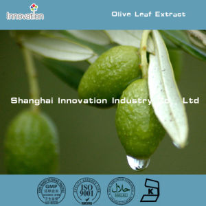 High Quality Olive Leaf Extract Oleuropein 5% 10% 20% 40%