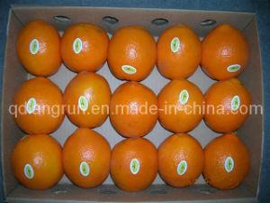 Sweet Fresh Navel Orange