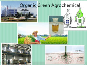 Agro Chemical, Plant Growth Cytokinine Cppu Forchlorfenuron Kt-30 68157-60-8 pictures & photos