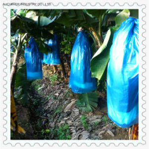 No Deformation of The Plastic Bags of Banana Pest Control pictures & photos