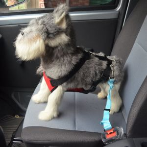 Fashion Pet Dog Accessories in Car Chain Dog Harness pictures & photos