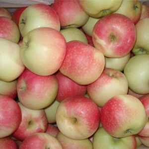 Good Quality Fresh Gala Apple New Crop Red Color pictures & photos