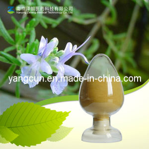 Rosmarinic Acid Powder Extract From Rosemary (20283-92-5) pictures & photos