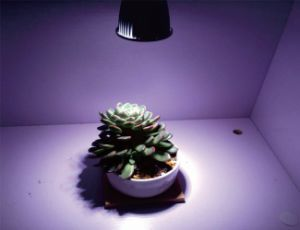 High Quality LED Grow Light for Flower Cultivation pictures & photos