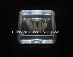 Large Denture Box with Membrane pictures & photos