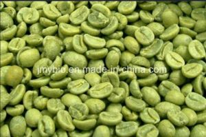 Weight Loss Natural Green Coffee Bean Extract Chlorogenic Acids50% pictures & photos