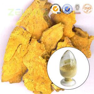 Pure Natural Polygonum Cuspidatum Extract 50% Resveratrol