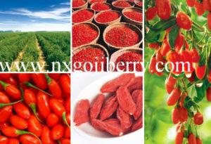 Goji Berry From China, Organic Goji FDA Certified, Super Goji Exporter pictures & photos