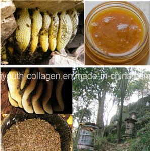 Top Honey, 100%Natural Organic Chinese Herbal Medicine Honey, Wild ...