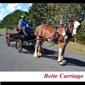 Horse Carriage 10 Seats for Sightseeing Tourist (BTH-10)