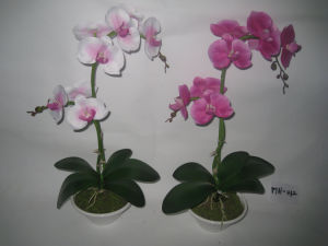 2012 New Design Hot Two Stems Artificial Orchid with White Plat Pot (MH-012)