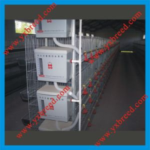Hot Galvanized Automatic a-Type Broiler Chicken Cage (H4L80) pictures & photos