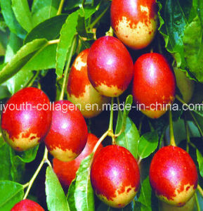 100%Natural Organic Jujube (Red Jujube) Extract /Red Jujube Fruit/ Nourishing Blood, Nourishing Spleen and Stomach, Liver Protection, Detoxification,Health Food pictures & photos