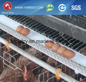 Silver Star H Type Full Automatic Rearing Equipment for Egg Chicken pictures & photos