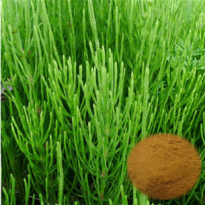 Organic Horsetail Extract Powder/Equisetum Arvense L. /7% Organic Silica pictures & photos
