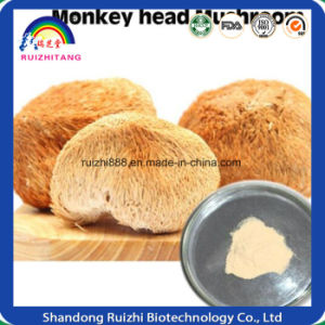GMP Factory Best Products High Quality Monkey Head Mushroom Extract/ Hericium Erinaceus Extract 30% Polysaccharide pictures & photos