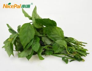 Spray Drying Hainan Potherb Wild Vegetable Powder From China Factory pictures & photos