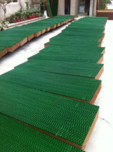 Glitter Evpoartion Cooling Pad in Greenhouse Poultry Flower pictures & photos