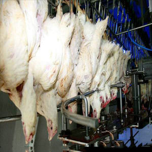 Poultry Slaughtering Machine for Poultry Farming House pictures & photos