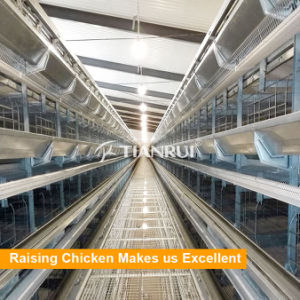 Tianrui Low Price H Type Automatic Poultry Cages 5 Layers pictures & photos
