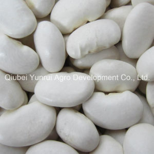 Large White Kidney Bean 50PCS