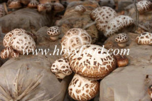 4-5cm Top Quality Dried White Flower Shiitake Mushroom pictures & photos