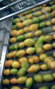 High-Quality Mango Pulp/Puree Processing Line pictures & photos