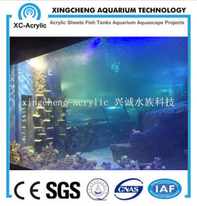Customized Transparent Acrylic Material Acrylic Seal Tank Project Price pictures & photos