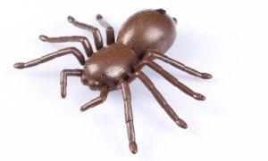 IR Spider