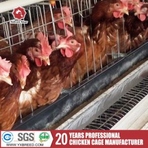 Automatic Farm Chicken Cages System for Broiler and Layer pictures & photos