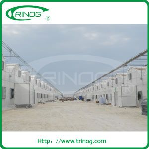 Large Commercial Film Greenhouse for Tropical Area pictures & photos