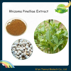 100% Natural Rhizoma Pinelliae Extract pictures & photos