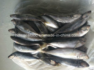 Big Size Horse Mackerel Fish for Sale pictures & photos