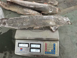 Frozen Farming Catfish Factory pictures & photos