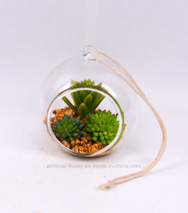 Handmade Mixed Succulent in Glass with Rocks pictures & photos