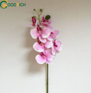 Real Touch Orchid Artificial Flower pictures & photos