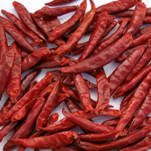 Chinese Red Chilli Wiht High Quality pictures & photos