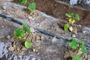 Irrigation Drip Tape pictures & photos