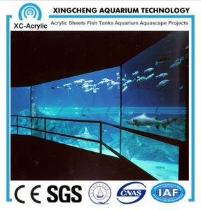 Acrylic Glass for Aquarium pictures & photos